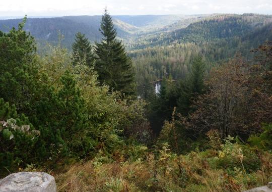 Schwarzwald Natur 2020